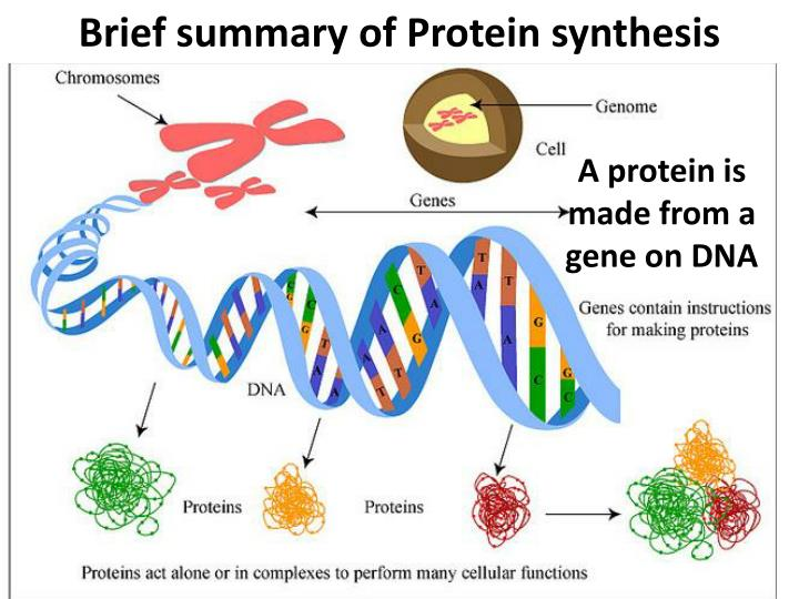 Brief summary of Protein synthesis