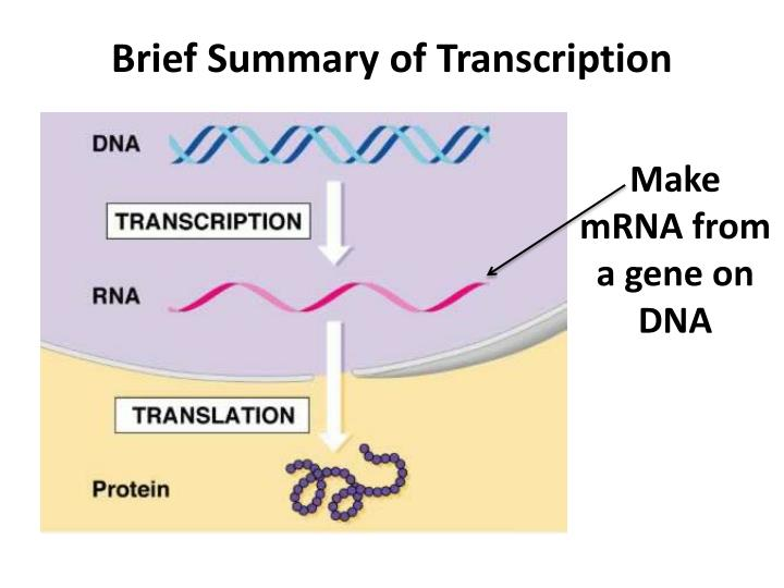 Brief Summary of Transcription
