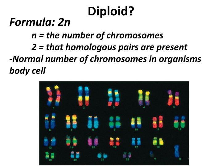 Diploid?