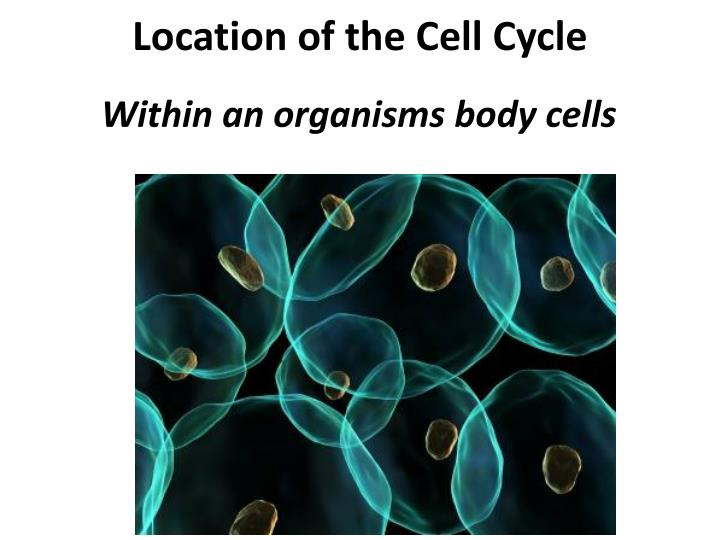 Location of the Cell Cycle