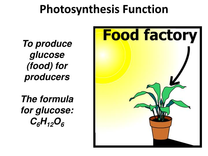 Photosynthesis function