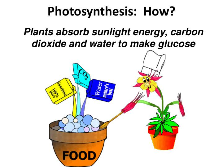 Photosynthesis:  How?