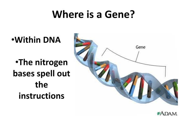 Where is a Gene?