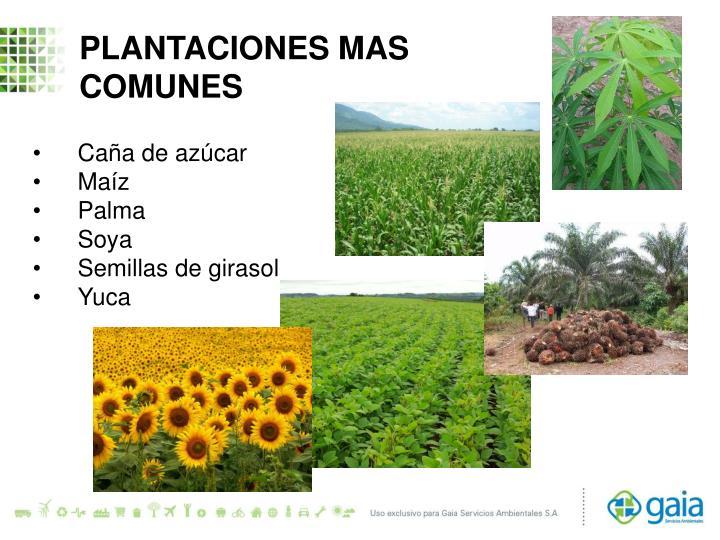 PLANTACIONES MAS
