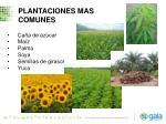 plantaciones mas comunes