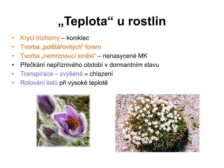 """""""Teplota"""" u rostlin"""