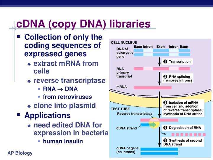 cDNA (copy DNA) libraries