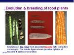 evolution breeding of food plants