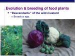 evolution breeding of food plants1