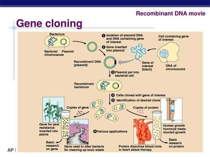 Recombinant DNA movie