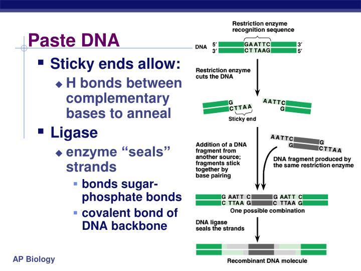 Paste DNA