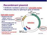 recombinant plasmid