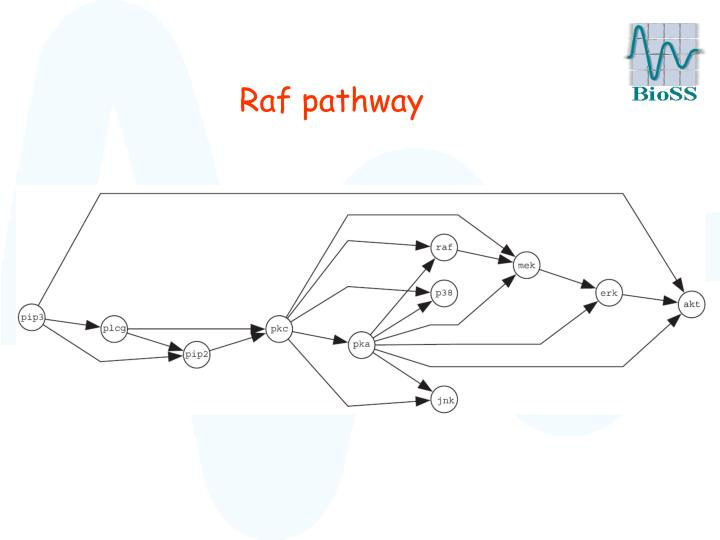 Raf pathway