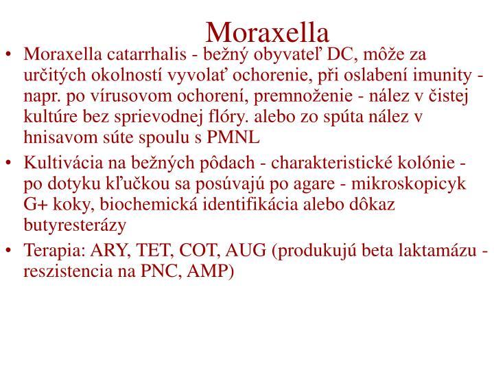 Moraxella