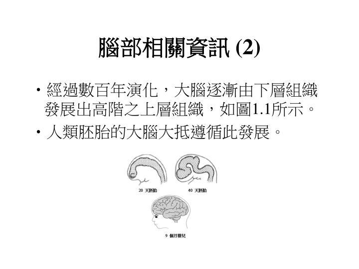 腦部相關資訊