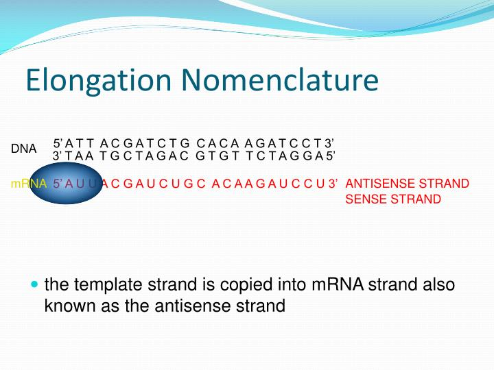 Elongation Nomenclature