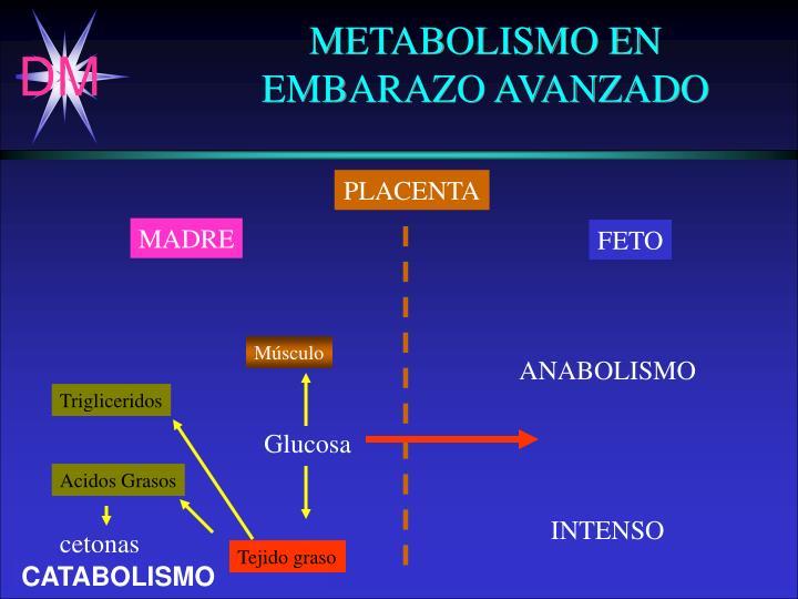 METABOLISMO EN
