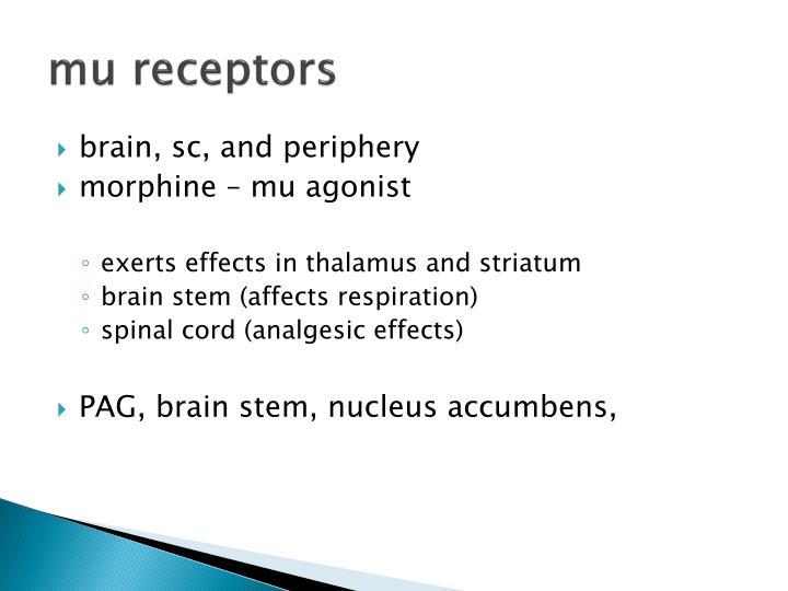 mu receptors