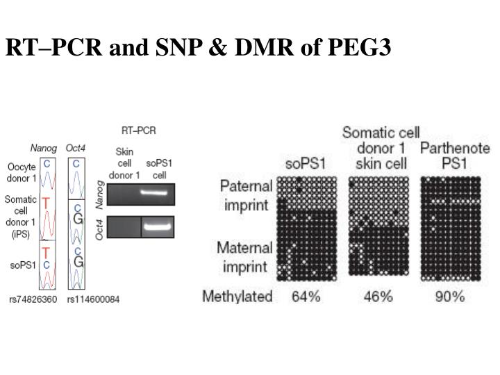 RT–PCR and