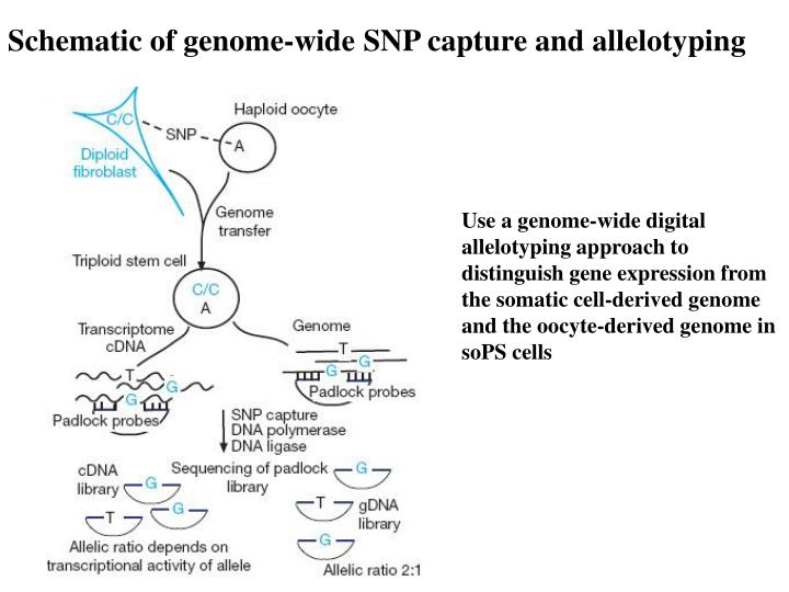 Schematic of genome-wide