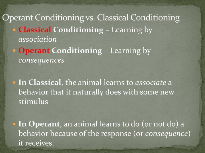 operant conditioning 4 essay