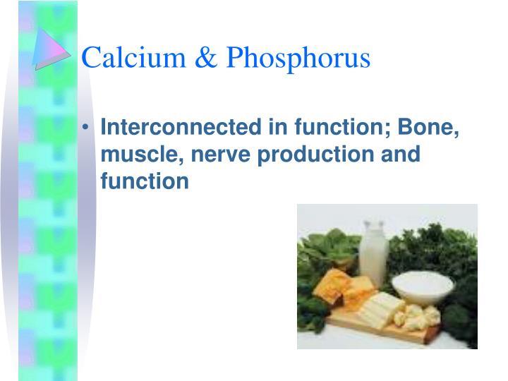 Calcium & Phosphorus