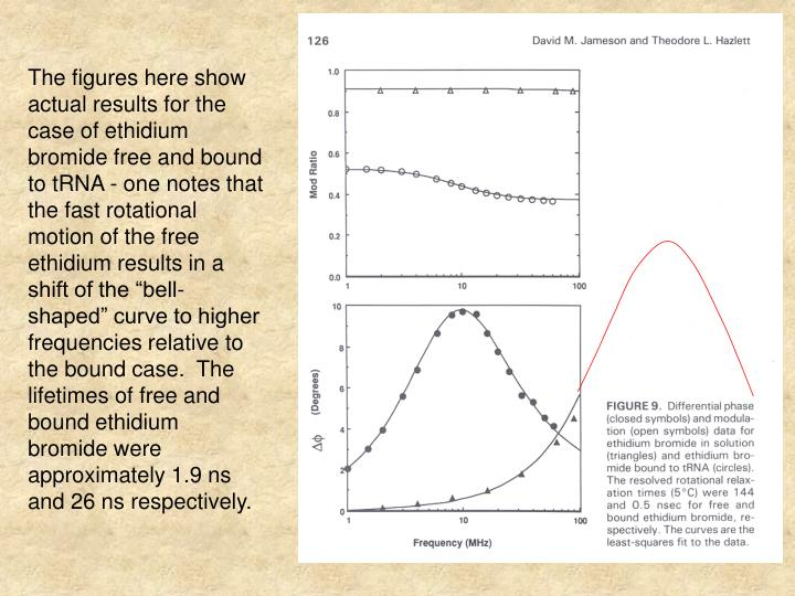 """The figures here show actual results for the case of ethidium bromide free and bound to tRNA - one notes that the fast rotational motion of the free ethidium results in a shift of the """"bell-shaped"""" curve to higher frequencies relative to the bound case.  The lifetimes of free and bound ethidium bromide were approximately 1.9 ns and 26 ns respectively."""