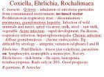 coxiella ehrlichia rochalimaea