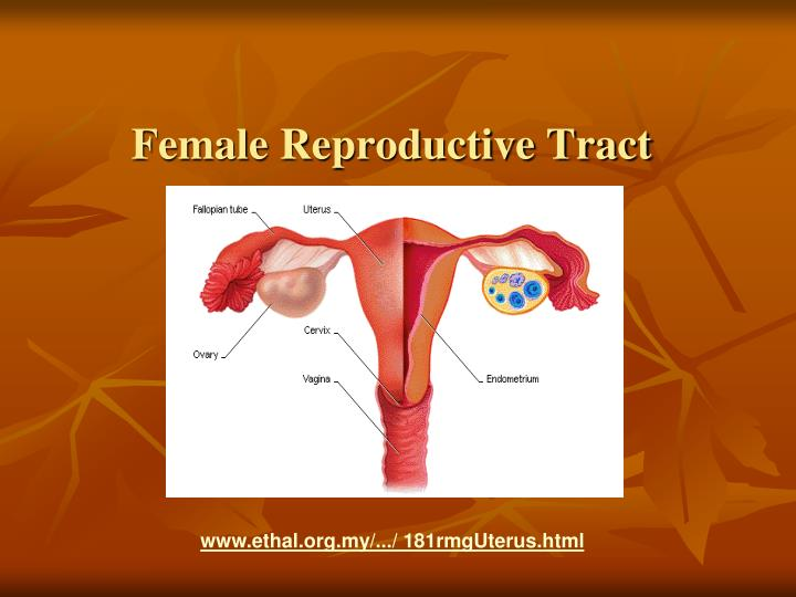 Female Reproductive Tract