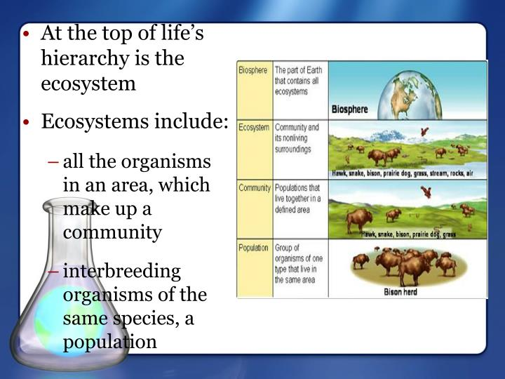 Ecosystems include: