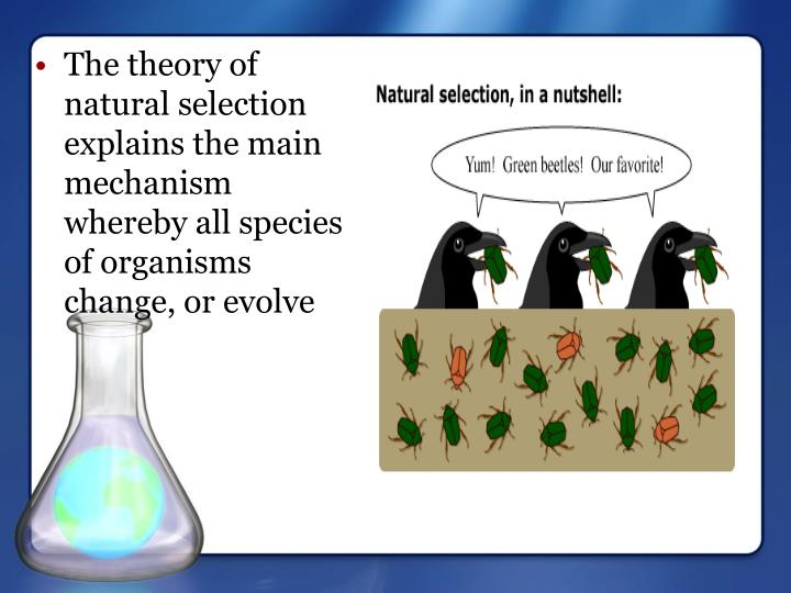 The theory of natural selection explains the main mechanism whereby all species of organisms change, or evolve