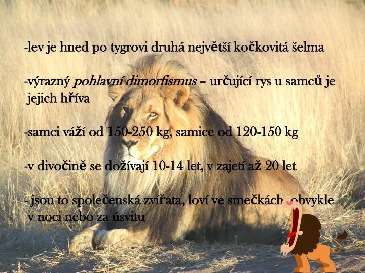 lev je hned po tygrovi druhá největší kočkovitá šelma