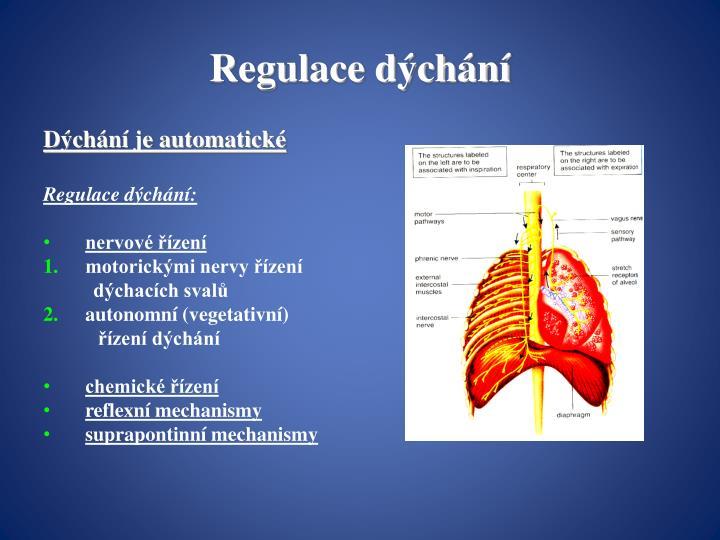 Regulace dýchání