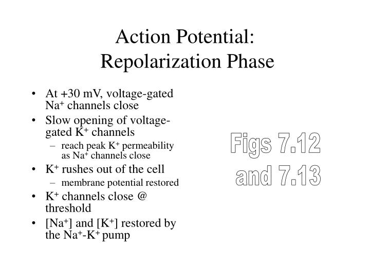 Action Potential: