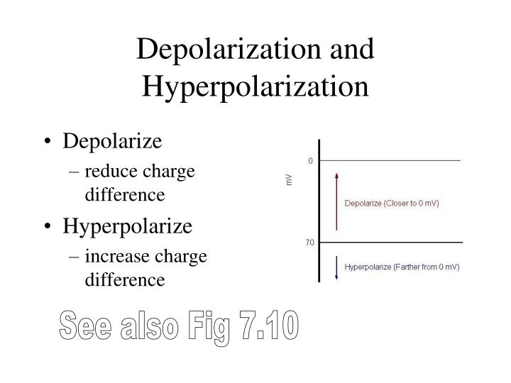Depolarization and Hyperpolarization