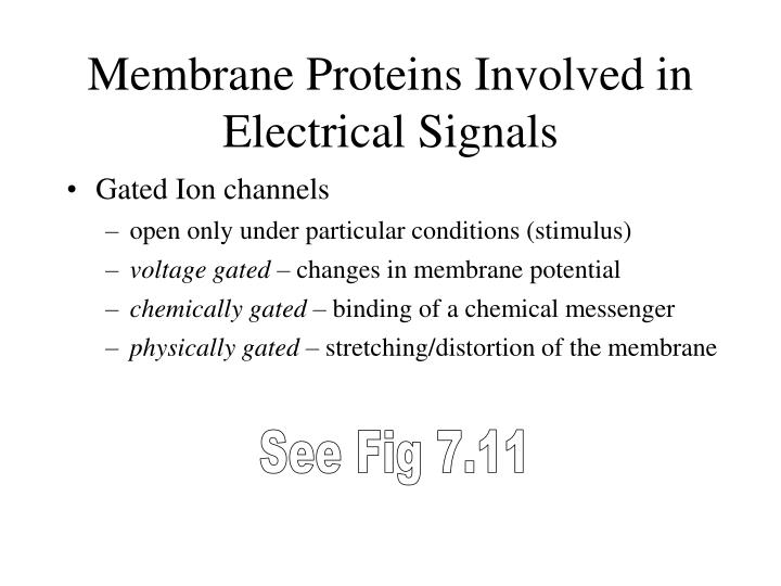 Membrane Proteins Involved in Electrical Signals