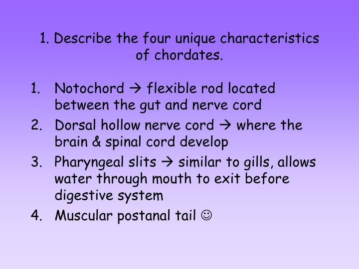 1 describe the four unique characteristics of chordates