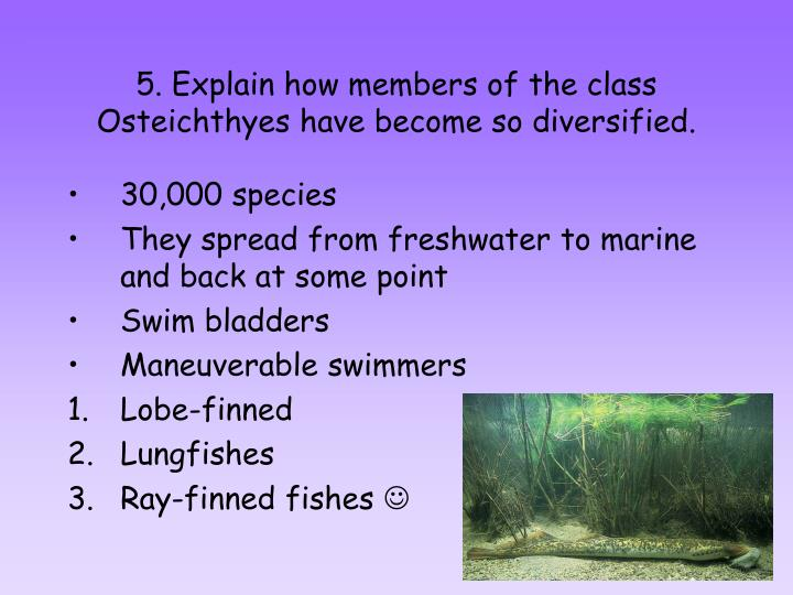 5. Explain how members of the class Osteichthyes have become so diversified.