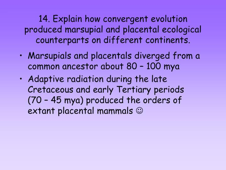 14. Explain how convergent evolution produced marsupial and placental ecological counterparts on different continents.