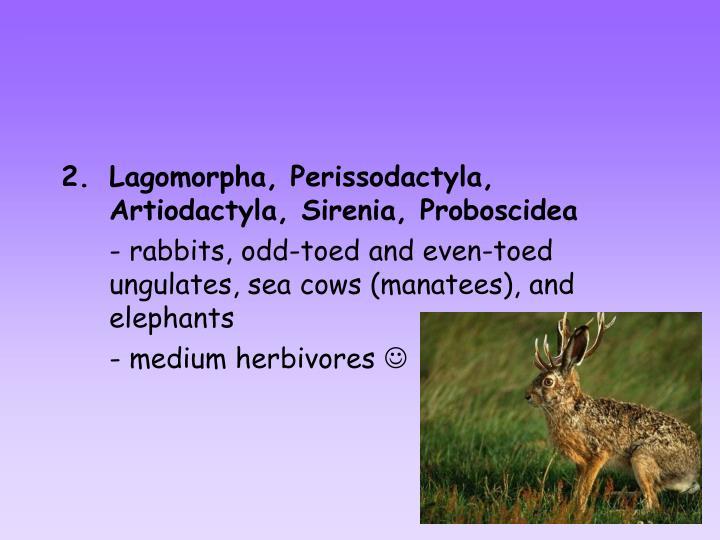 Lagomorpha, Perissodactyla, Artiodactyla, Sirenia, Proboscidea
