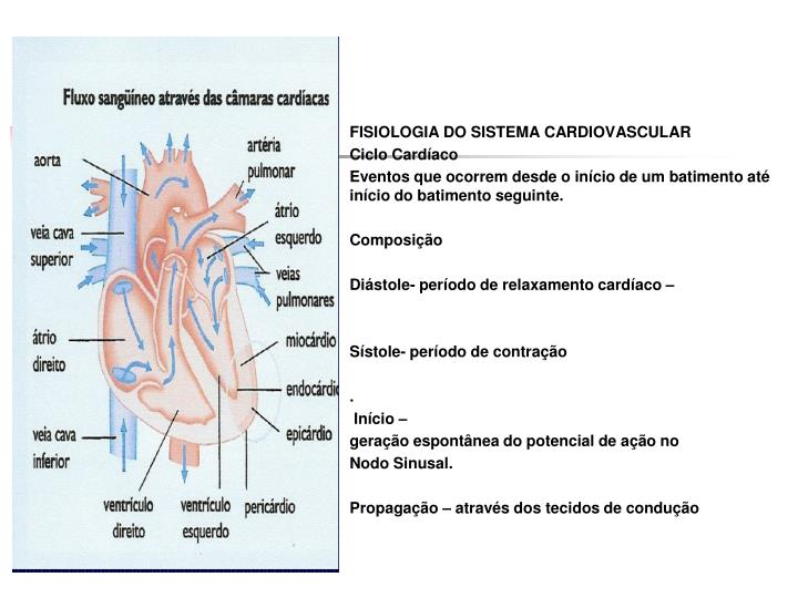 FISIOLOGIA DO SISTEMA CARDIOVASCULAR
