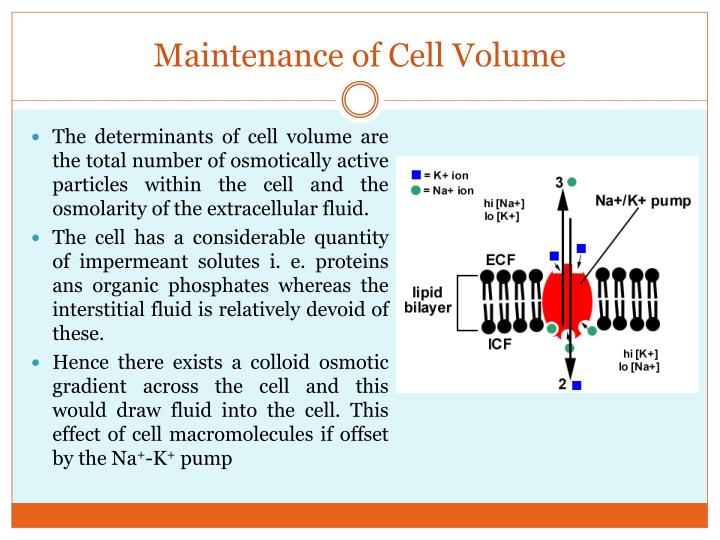 Maintenance of Cell Volume