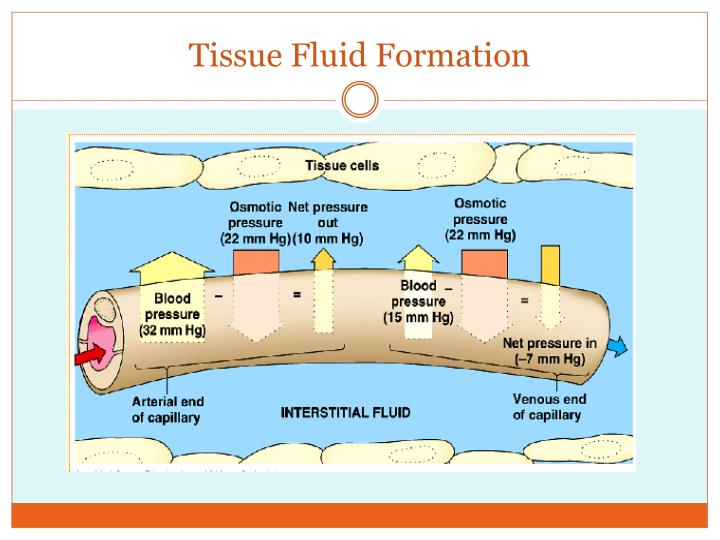 Tissue Fluid Formation