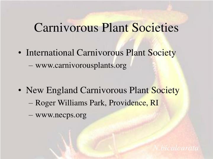 Carnivorous Plant Societies
