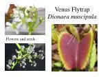 venus flytrap dionaea muscipula1