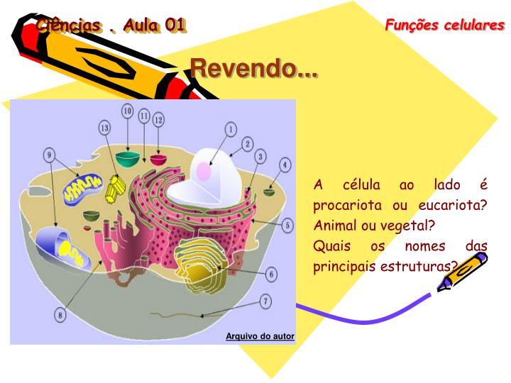 Funções celulares