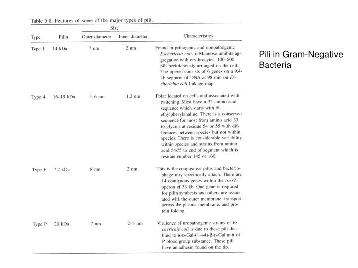 Pili in Gram-Negative
