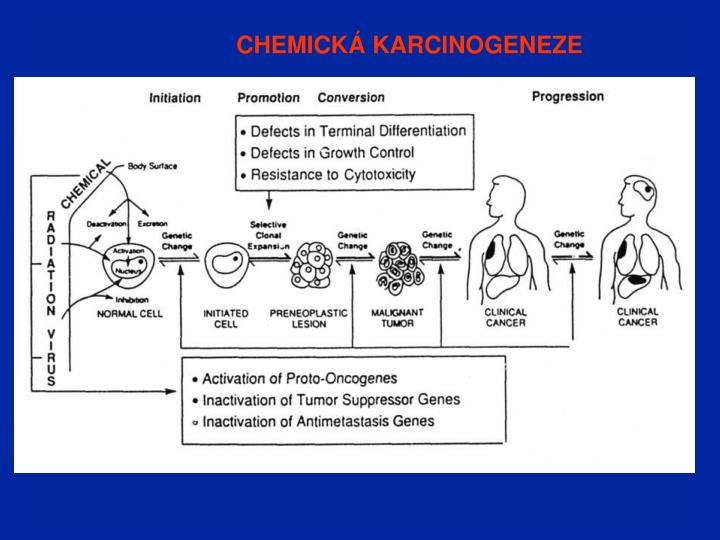 CHEMICKÁ KARCINOGENEZE
