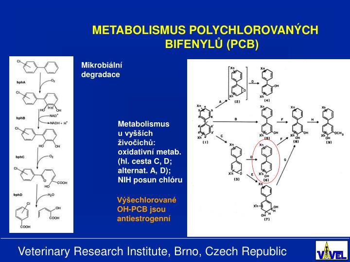 METABOLISMUS POLYCHLOROVANÝCH BIFENYLŮ (PCB)