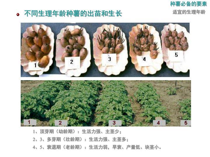 种薯必备的要素